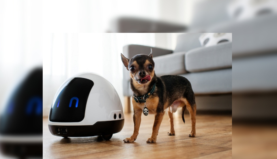 Live smart robotic pets for elderly suggested by Robojap LLC
